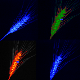 Chlorophyllx4, Image by Eleanor Gates-Stuart