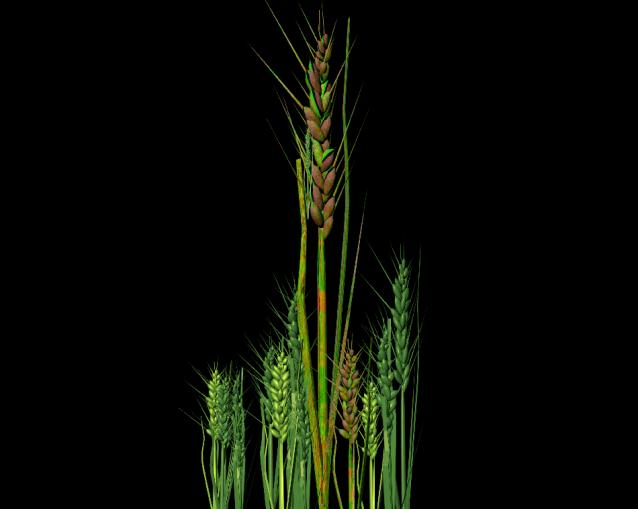 BioWheat, Image by Eleanor Gates-Stuart