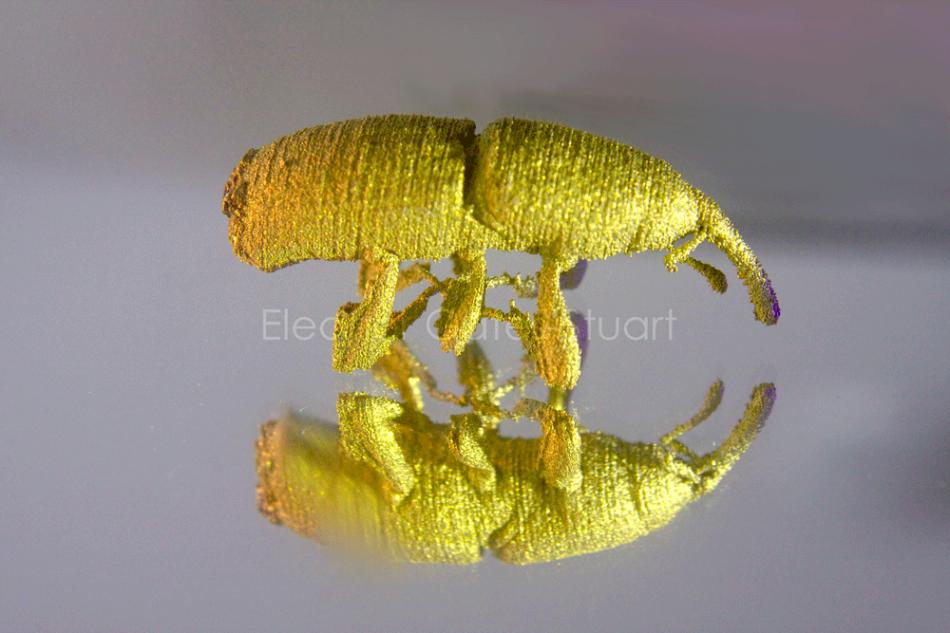 Titanium Weevil by Eleanor Gates-Stuart in collaboration with Chuong Nguyen & Sherry Mayo, CSIRO