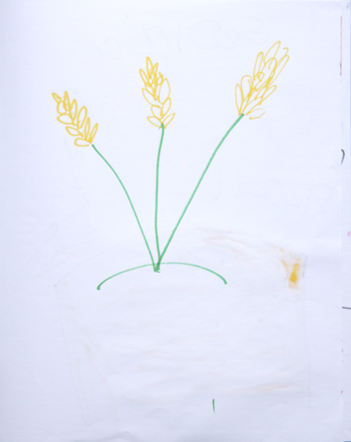 Great wheat image by Visitor to StellrScope Exhibition